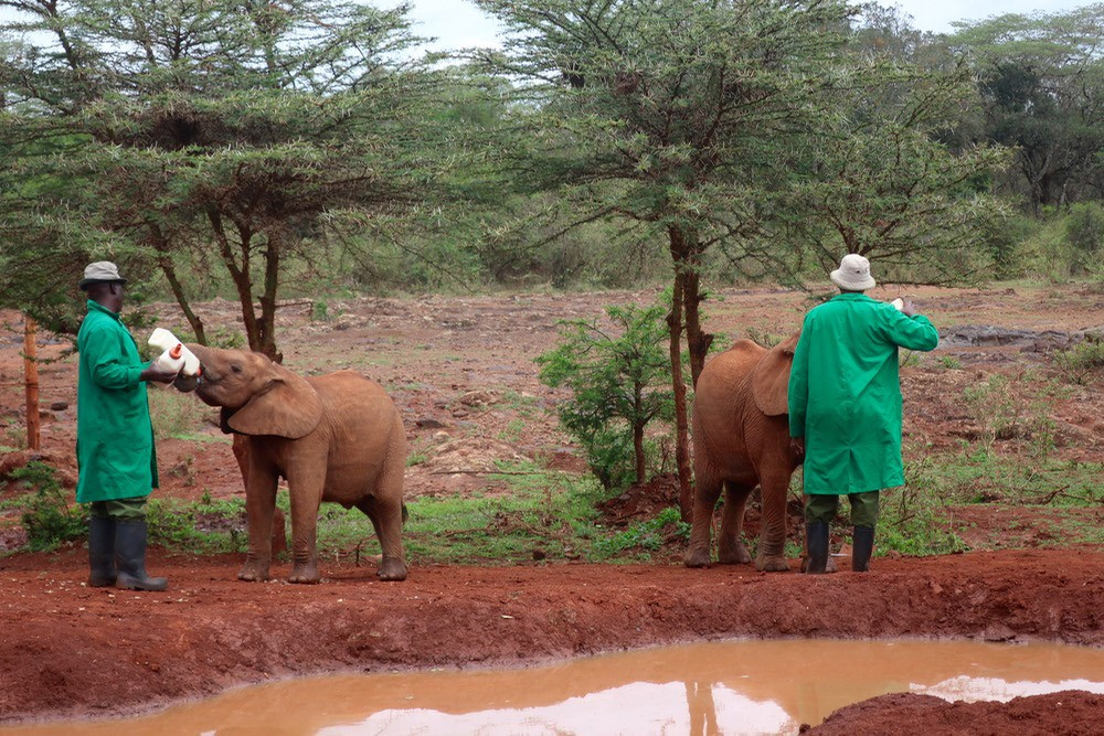 Essential Tips for Your First African Safari