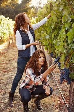 Robin and Andrea McBride of Truvée Wines