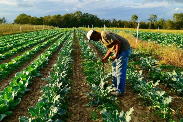 African American and Native American Organic Farms Across the Southeast Become the Focus of Philanthropic Tour
