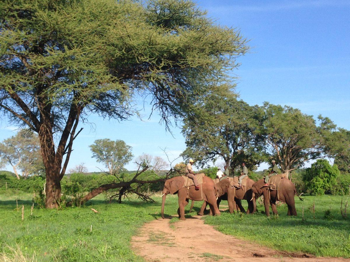 Victoria Falls Reserve in Zimbabwe