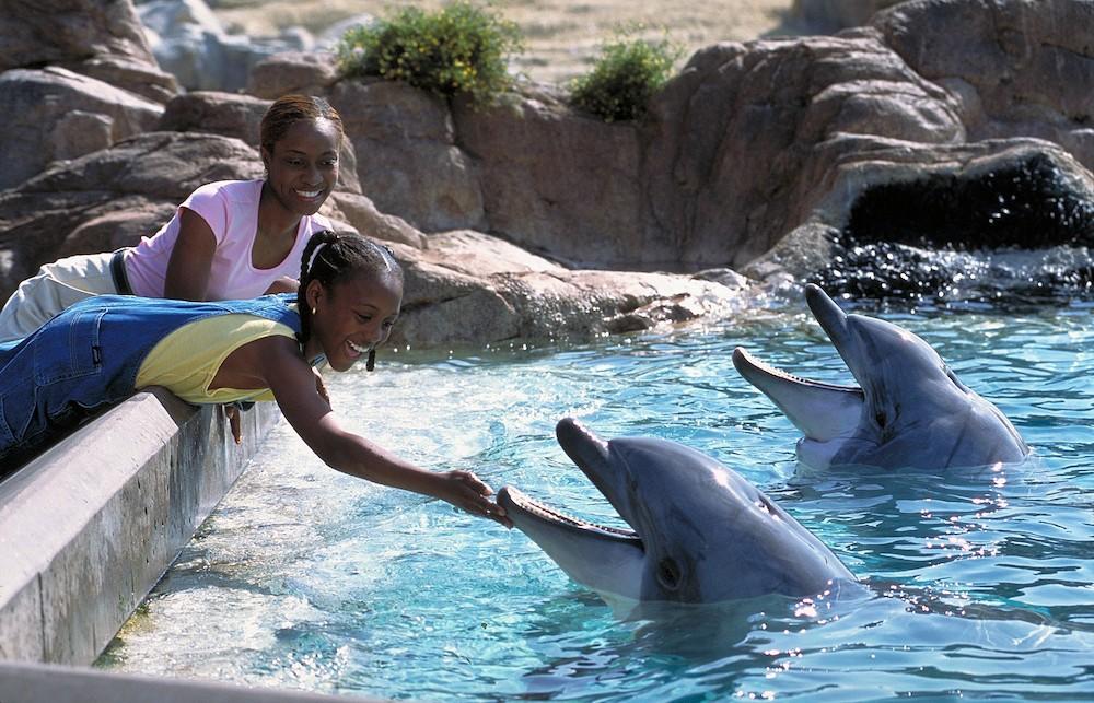 Two girls feeding dolphins at San Diego Sea World