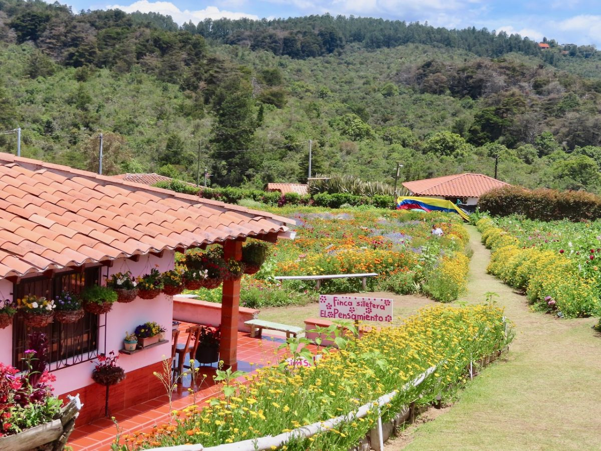 Flower Farm in Santa Elena in Colombia