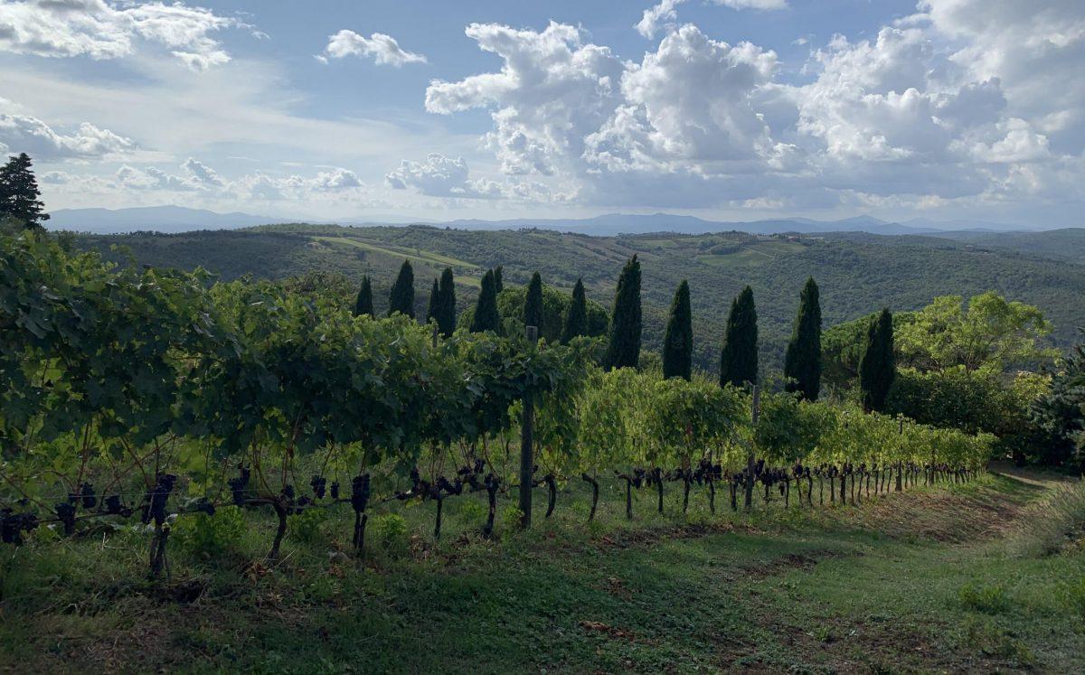 Il Palazzone vineyards on Tuscany, Italy