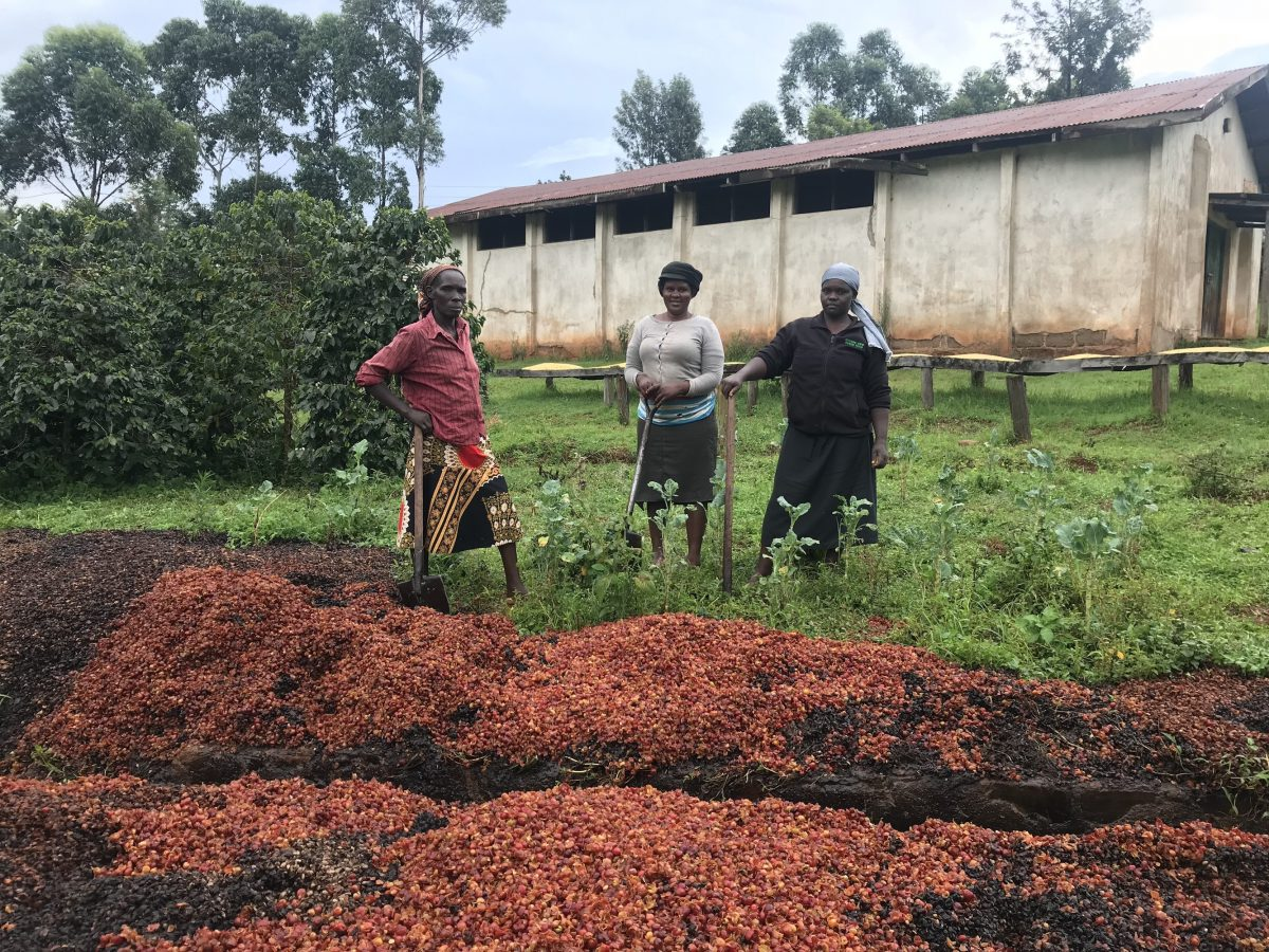 Kahawa 1893 Kenyan coffee farmers