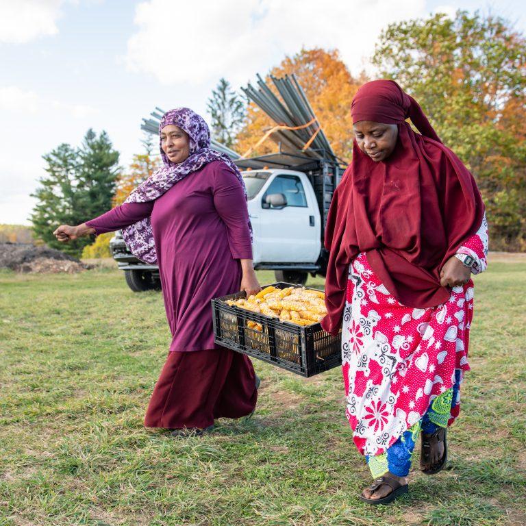 Somali Bantu women carrying harvested corn