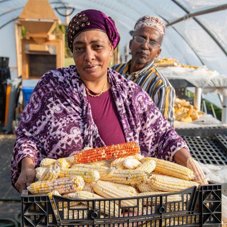 Somali Bantu community members with harvested corn