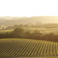 Paso Robles Wine Country